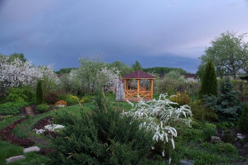 Наш сад так это хвойные растения